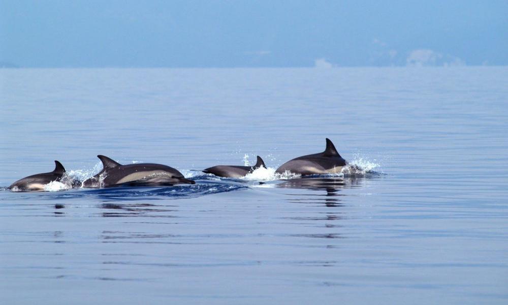 δελφίνια στο Λουτράκι