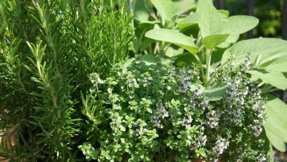 3000-βότανα-έχουν-αντικαρκινική-δράση