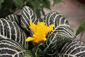 φυτά-εσωτερικού-χώρου