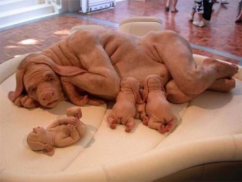 Από εγκατάσταση έργου τέχνης που ασκεί κριτική στη διασταύρωση ανθρώπου/ζώου