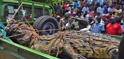 krokodeilos-ouganta
