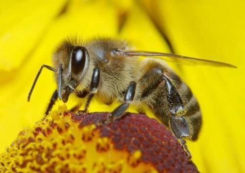 οι-επιστήμονες-ανακάλυψαν-τι-σκοτώνει-τις-μέλισσες-1