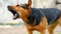 πως-να-αποφύγετε-το-δάγκωμα-του-σκύλου