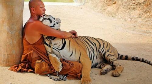 ο-ναός-των-τίγρεων-εικόνες