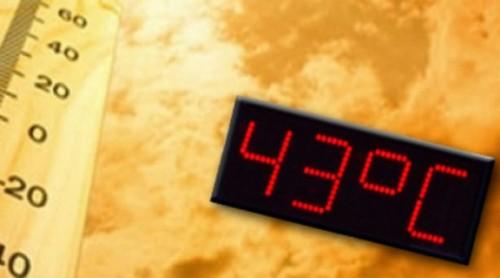 293xesz (1)