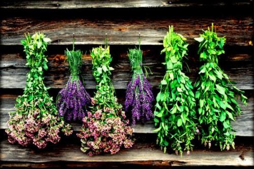 download-τα-φαρμακευτικά-φυτά-της-Ελλάδας-1