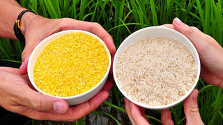 η-κίνα-σταματά-την-παραγωγή-γενετικά-τροποποιημένου-ρυζιού-και-καλαμποκιού