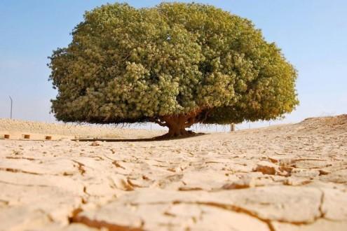 τα-ομορφότερα-δέντρα-του-κόσμου-1