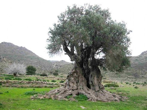 τα-ομορφότερα-δέντρα-του-κόσμου-11