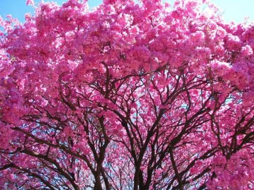τα-ομορφότερα-δέντρα-του-κόσμου-13