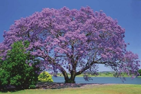 τα-ομορφότερα-δέντρα-του-κόσμου-14