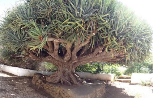 τα-ομορφότερα-δέντρα-του-κόσμου-15