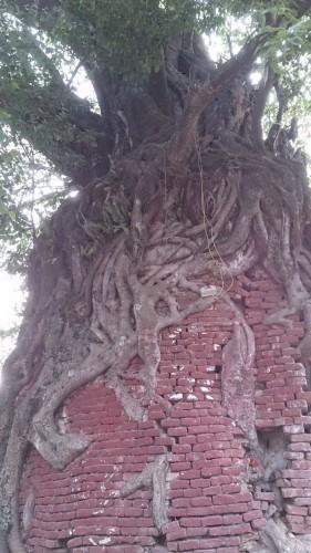 τα-ομορφότερα-δέντρα-του-κόσμου-17