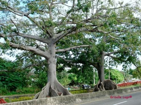 τα-ομορφότερα-δέντρα-του-κόσμου-19