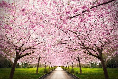 τα-ομορφότερα-δέντρα-του-κόσμου-2