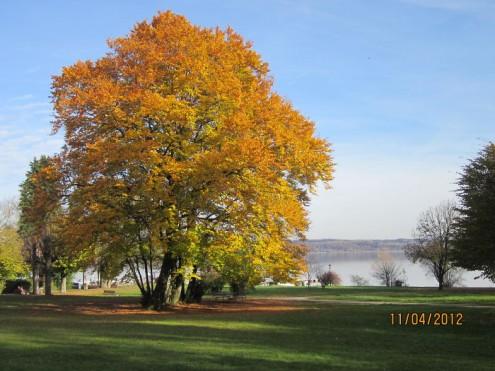 τα-ομορφότερα-δέντρα-του-κόσμου-20