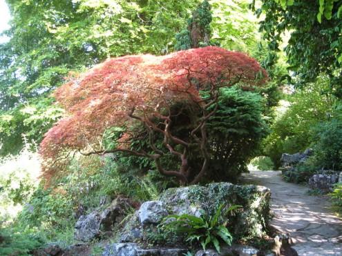 τα-ομορφότερα-δέντρα-του-κόσμου-21
