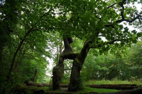 τα-ομορφότερα-δέντρα-του-κόσμου-22