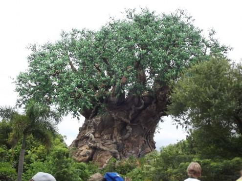 τα-ομορφότερα-δέντρα-του-κόσμου-23