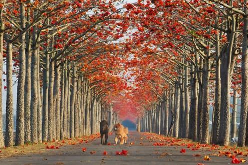 τα-ομορφότερα-δέντρα-του-κόσμου-3