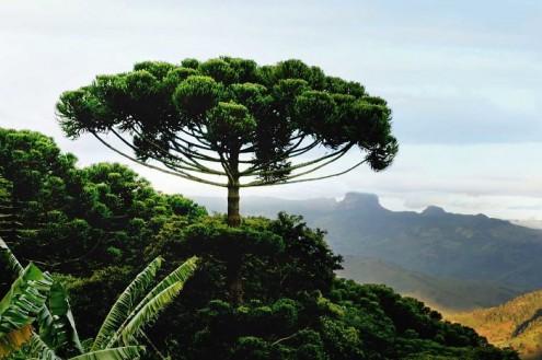 τα-ομορφότερα-δέντρα-του-κόσμου-4