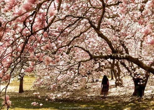 τα-ομορφότερα-δέντρα-του-κόσμου-5