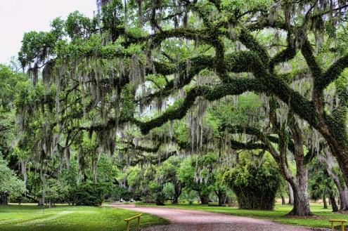 τα-ομορφότερα-δέντρα-του-κόσμου-6