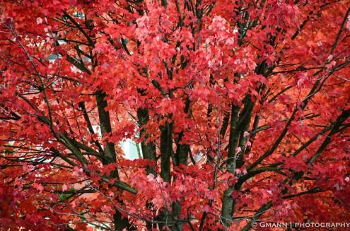 τα-ομορφότερα-δέντρα-του-κόσμου-7