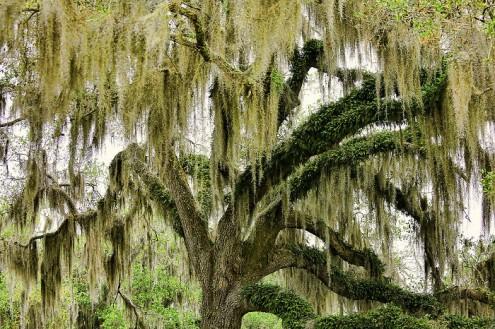 τα-ομορφότερα-δέντρα-του-κόσμου-8