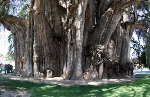 τα-ομορφότερα-δέντρα-του-κόσμου-9