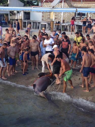 χαλκιδική-ψαράς-έπιασε-σκυλόψαρο