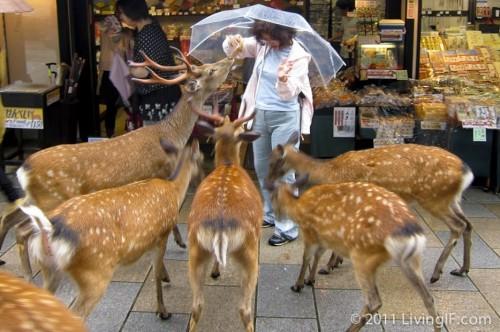 χιλιάδες-ελάφια-κατέλαβαν-αυτή-την-πόλη-στην-Ιαπωνία