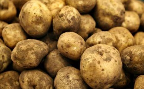 potatoes_2014_8_20_22_54_57_b2