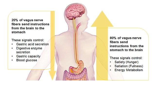 Image result for πνευμονογαστρικο παχυσαρκια