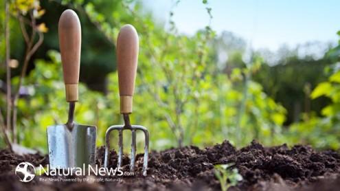 πως-να-καταστρέψετε-με-φυσικό-τρόπο-τα-ζιζάνια-στον-κήπο-σας