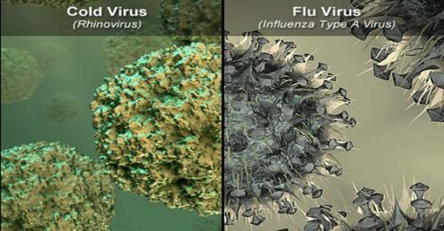 η-αλήθεια-για-το-κρύωμα-και-τη-γρίπη