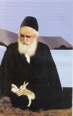 Image result for αγιος παισιος και η αγαπη του για τα ζωα