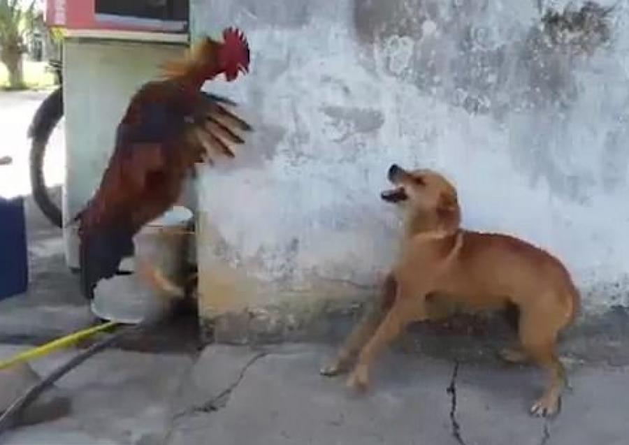βίντεο κόκορας αραβικό σπιτικό πορνό
